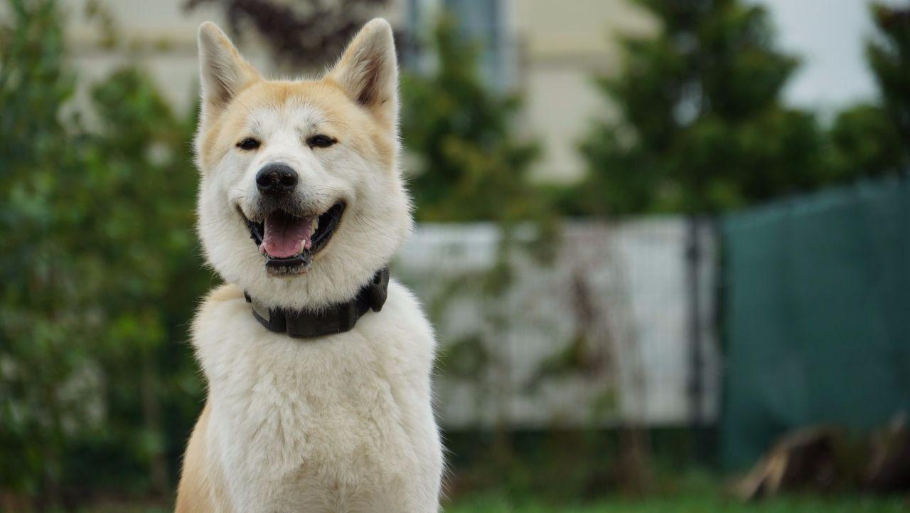 Psi biznes - spacery, przedszkole i pensjonat z basenem